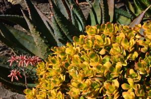 Desert cactus 5
