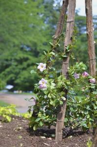 Monticello flowers