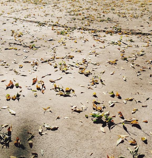 leafscatterings