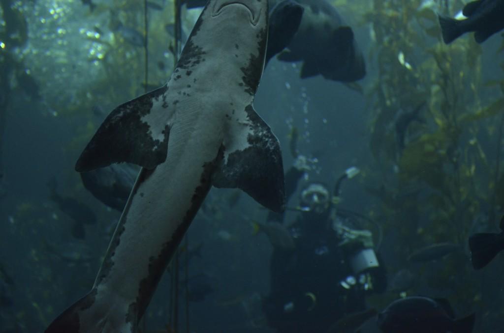 shark photo bomb