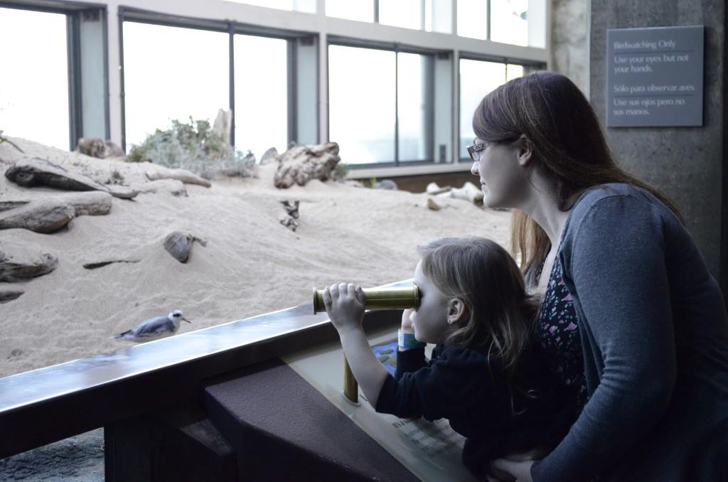 wetlands viewing