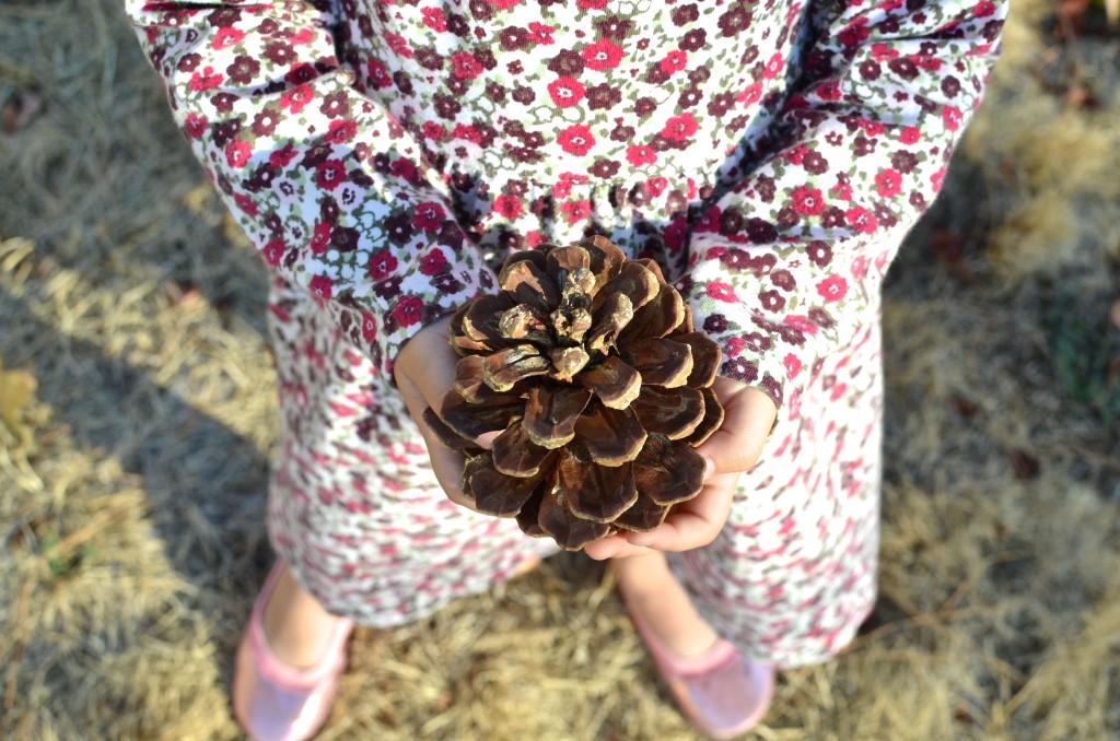 evey-pinecone