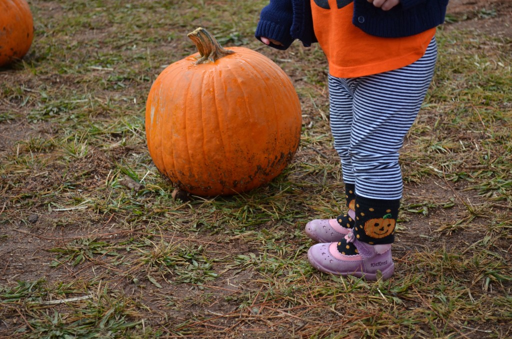 pumpkin-socks