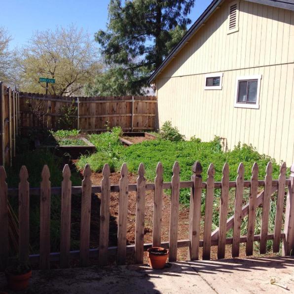 garden beginnings