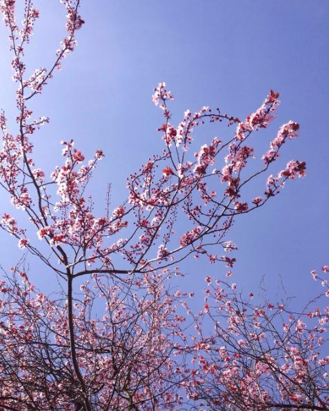 spring blossoms in Victoria, BC