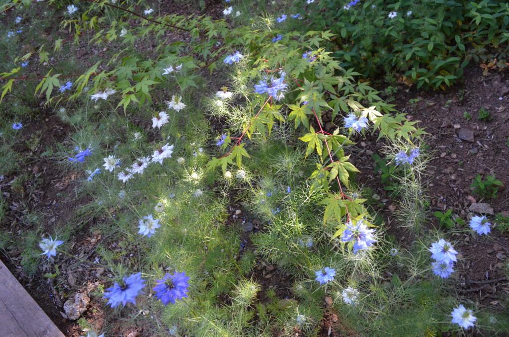spring garden 2016