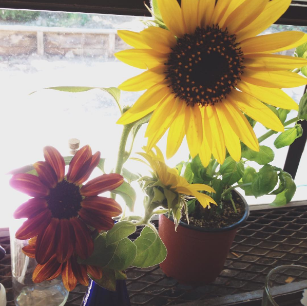 homegrown sunflowers