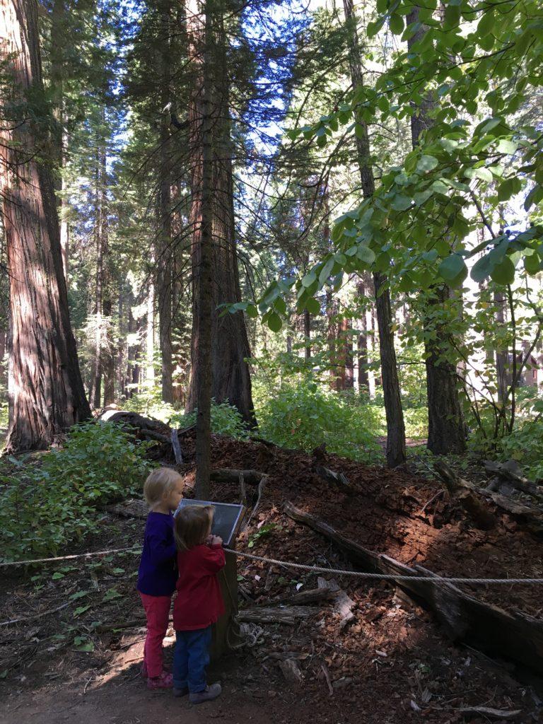 calaveras big trees camping