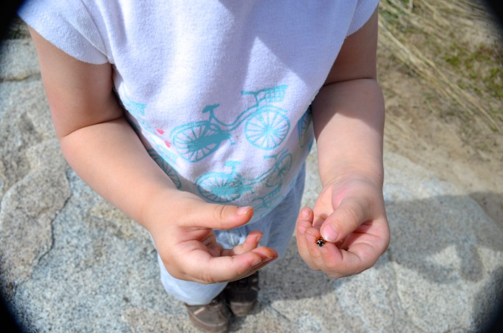 holding a ladybug - June 2016