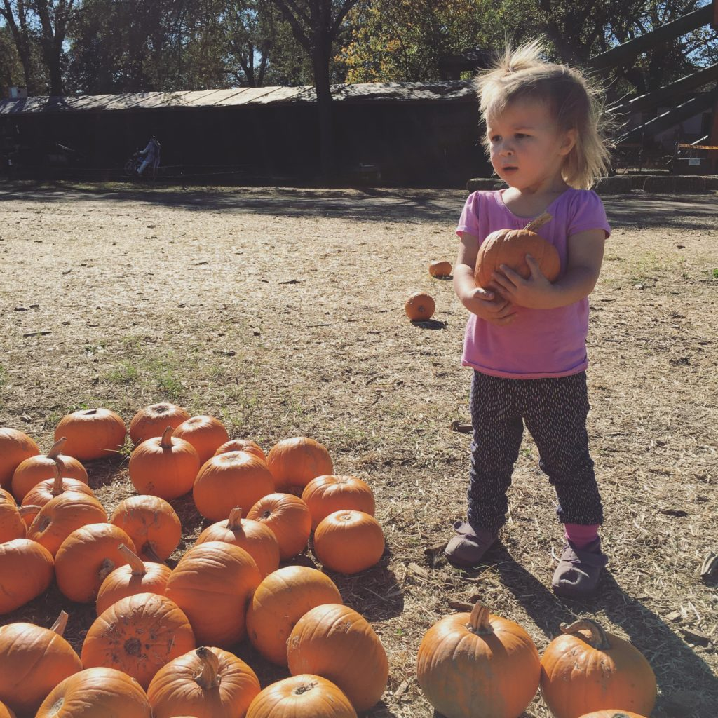 pumpkin patch - Oct 2016
