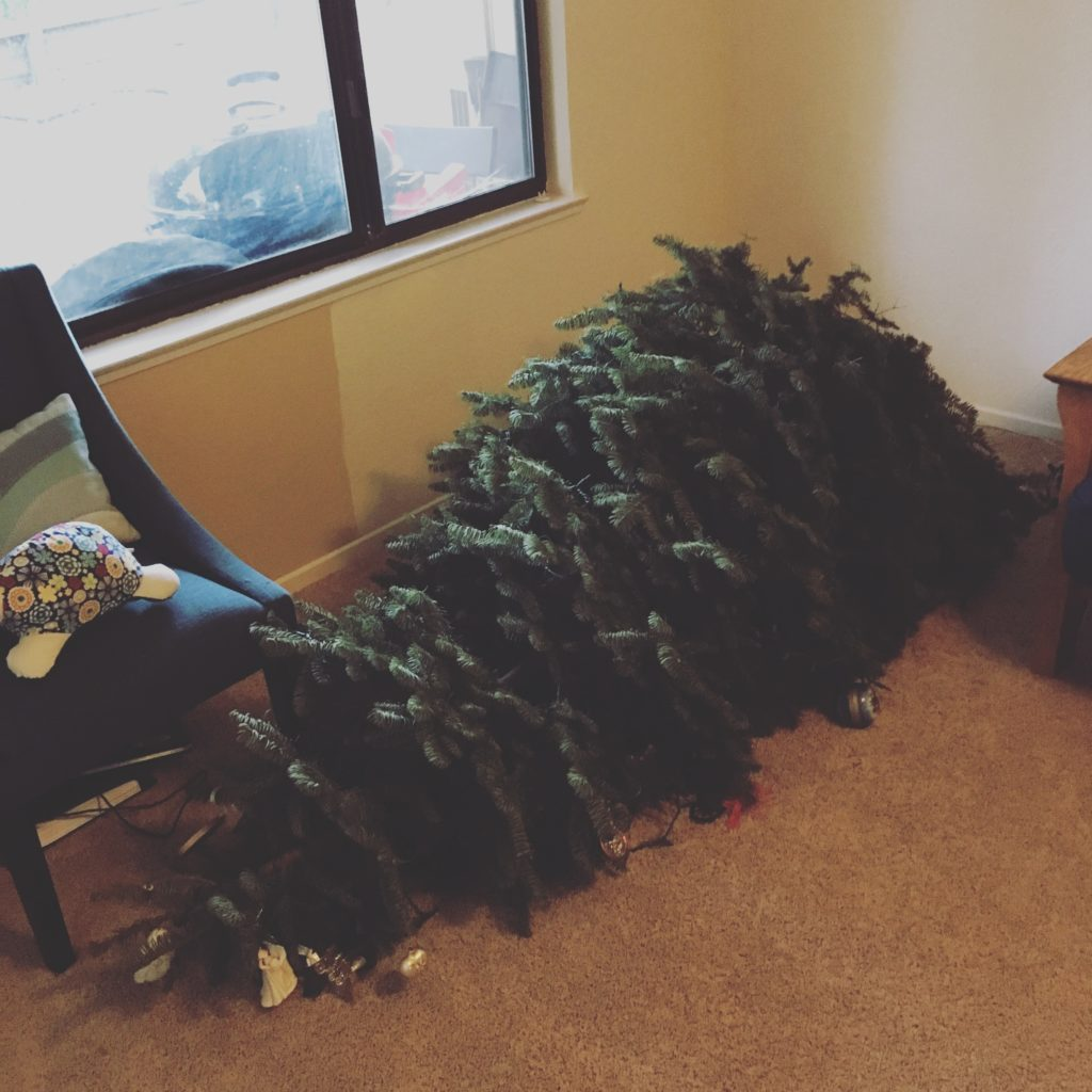 fallen Christmas tree - Dec 2016